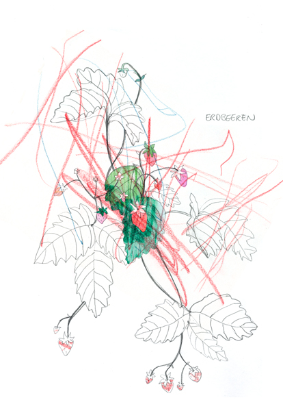 Erdbeeren, Garten, Zeichnung