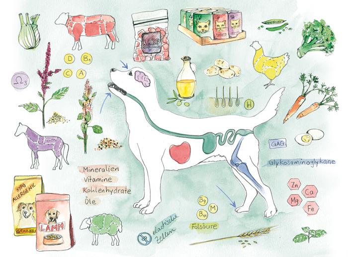Illustration, Editorial, Mein Haustier, Ernährung, Inpact MediaVerlag