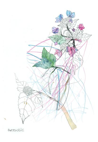 Hortensie, Pflanze