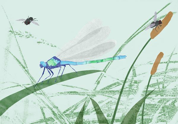 Libelle, Fliege, Illustration, Editorial, Garten, Collage, Gras