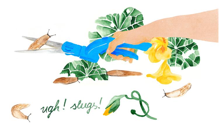 Schneckenplage, ugh slugs, Illustration, Editorial, Aquarell